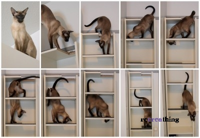arrampicatore per gatti
